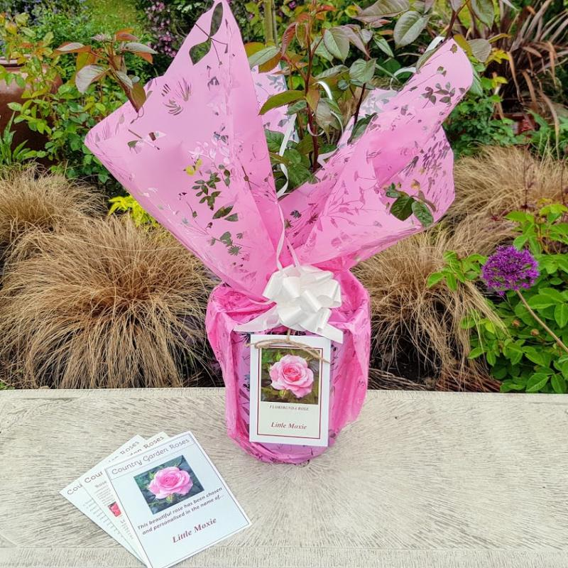 Blush Pink Name Your Own Rose Gift Wrapped